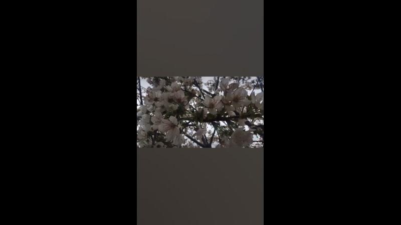Видео от Argun Ka