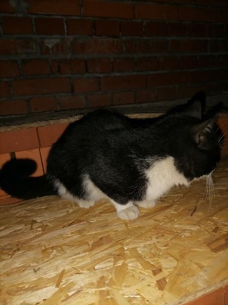 Приблудился молодой котик, Мытищи, Снт