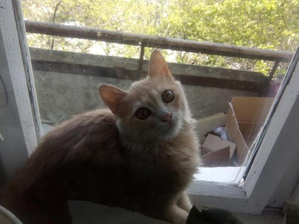 Пропала кошка в районе старшинова 19, откликается ...