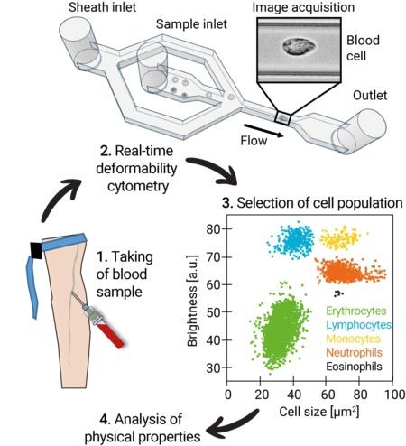 Как коронавирус влияет на изменение клеток крови в долгосрочной перспективе. Перевод статьи., изображение №2