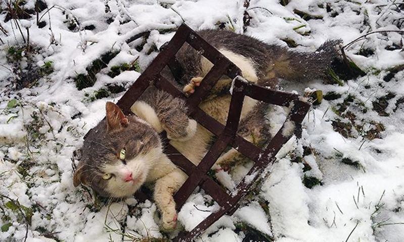 История о том, как в Кимрах депутат депутату помогал кота спасать