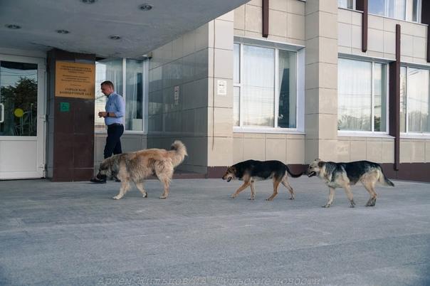 ✅ Жителя Узловой покусала бездомная собака: админи...