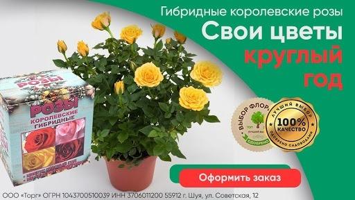Кейс: «Королевские гибридные розы» в MyTarget!, изображение №8