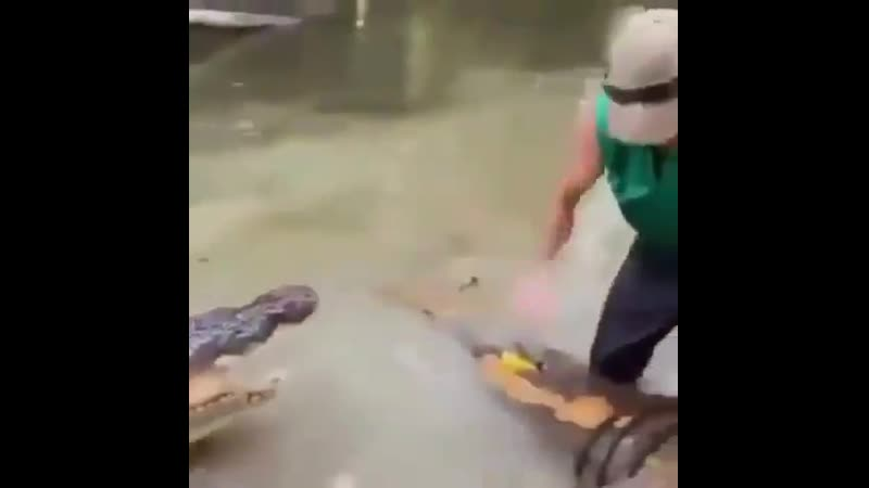 Экстрим видео аллигатор мой друг