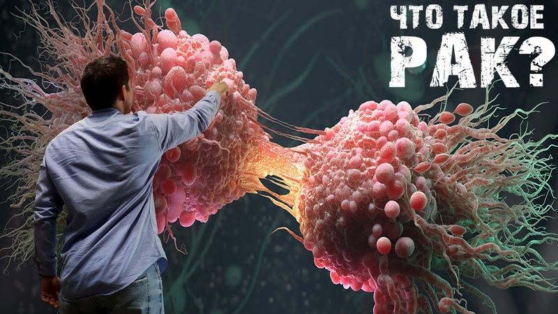 Что такое рак Бессмертные клетки HeLa Просто об онкологии