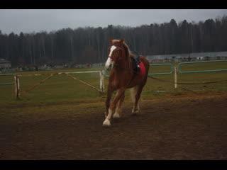Моя любимая лошадь