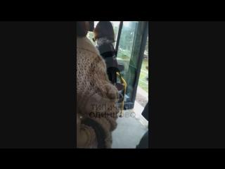 461 автобус сломался в Одинцово: конфликт пассажиров и перевозчика