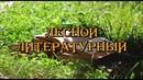 Театр-студия Арлекин - Лесной литературный. Часть 2