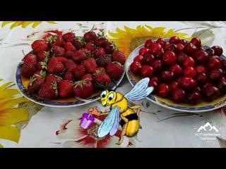 Как мыть фрукты , овощи, ягоды и зелень ? Как мыть клубнику и ягоды ?
