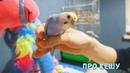 У нас дома РАДУЖНЫЙ ручной попугай КЕША . Parrot Kesha