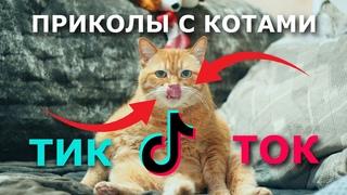 Смешные животные. Приколы с котами из тик ток