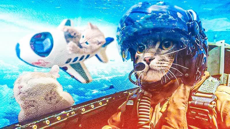 Смешные коты Подборка за неделю 96 Котопятница
