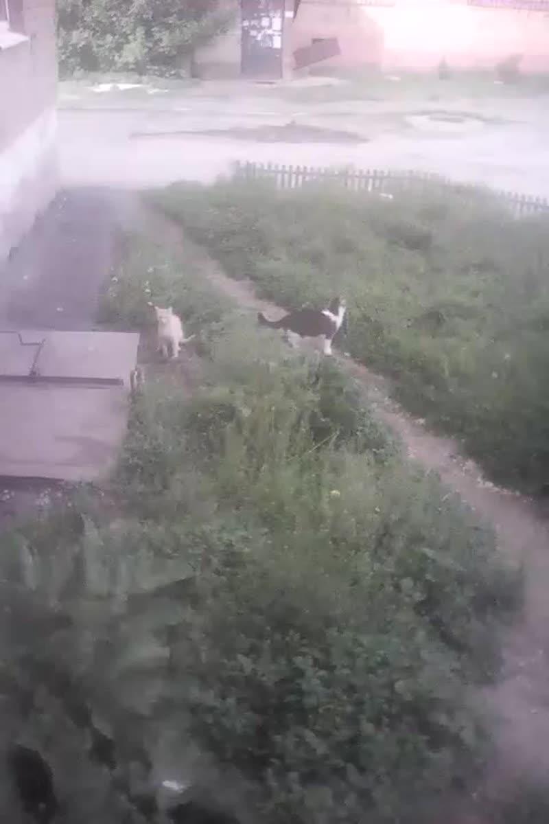 ВОЗЛЕ ПОДЪЕЗДА (гуляет вечером Семка , рядом рыжий кот).