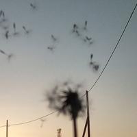Фото профиля Алдын-Сай Донгак