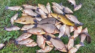 Карась весной - Рыбалка в МАЕ   Два отца и два сына - семейная рыбалка   Китайское тесто - Херабуна