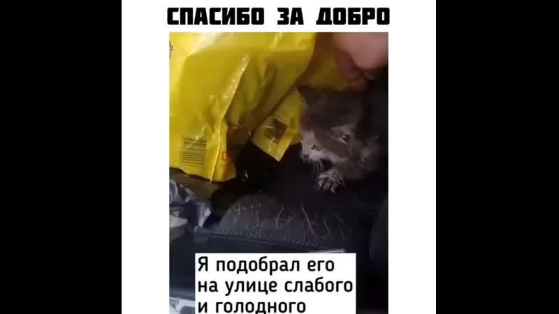 Kot_vasilec_20200525_4.mp4
