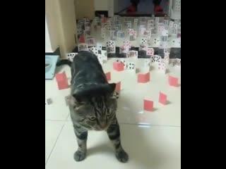 Не смотря на то, что коты любят ронять все подряд, они способны перейти любые сложные препятствия без проблем
