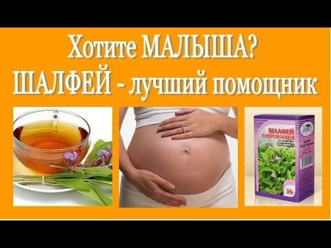 Не получается ЗАБЕРЕМЕНЕТЬ ШАЛФЕЙ - лучший помощник! Salvia (sage) - for pregnancy