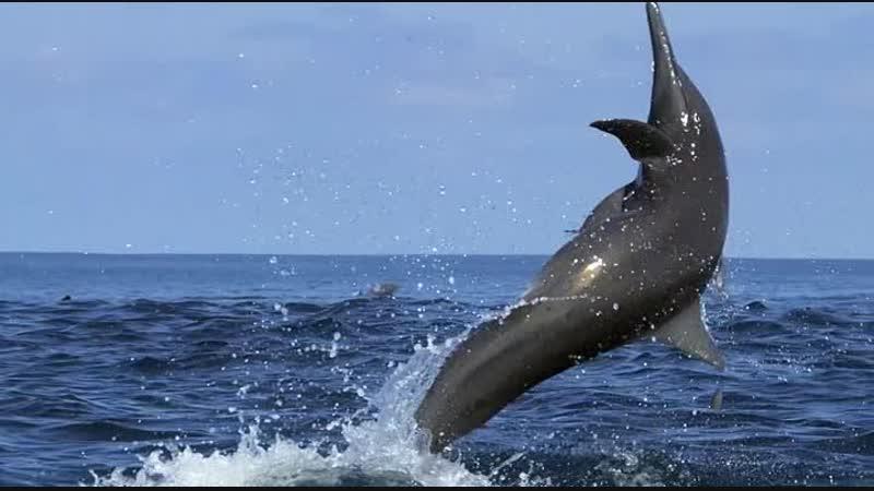 Дельфины — Шпион в стае / Dolphins — Spy In The Pod (2014. Часть 1)