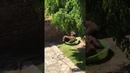 Мама медведь и детеныши болтаются в детском бассейне || ViralHog