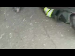 Змея залезла в печку в автомобиле